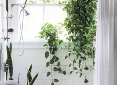 Цветы в ванной комнате: поднимаем настроение с утра