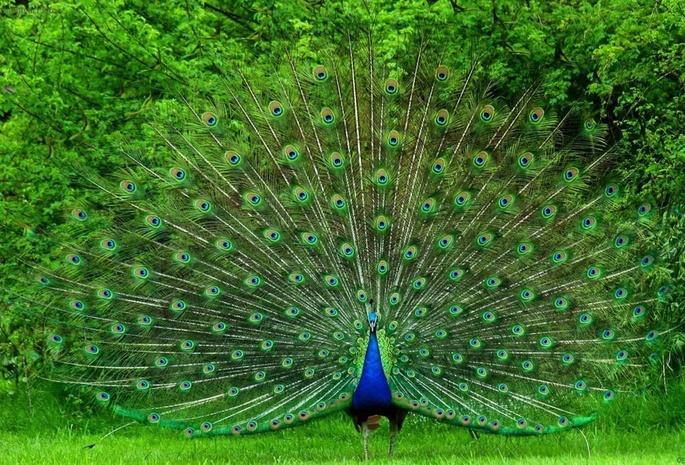 Красивые фотообои с животными